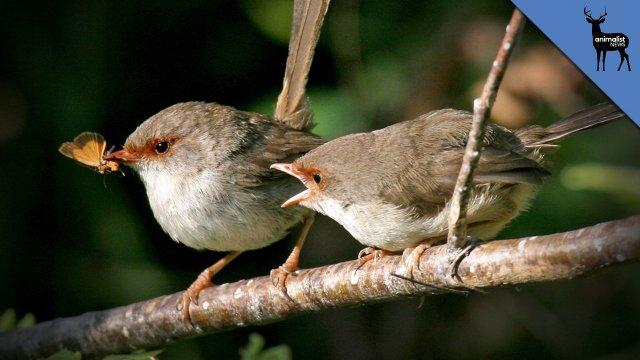 These Birds Must Learn Their Name or Die - Animalist News