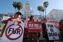 California governor signs fur sale, circus animal bans