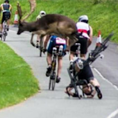 This is a perfectly timed photo of a deer taking out a cyclist during a triathlon