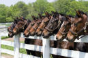 13 horses apparently shot and killed in Kentucky