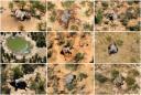 Botswana says toxins in water killed hundreds of elephants